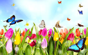 Large_spring_butterflies
